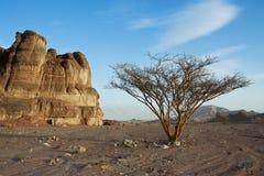 Paisaje del desierto. Fotos de archivo