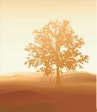 Paisaje del desierto