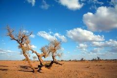 Paisaje del desierto Imagen de archivo libre de regalías