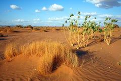 Paisaje del desierto Imagen de archivo