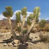 Paisaje del desierto con el árbol. Imagen de archivo libre de regalías