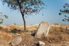 Paisaje del desierto con el árbol y la lápida mortuaria Foto de archivo