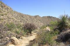 Paisaje del desierto con el cielo azul y el cactus Fotos de archivo
