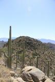 Paisaje del desierto con el cielo azul y el cactus Imagen de archivo
