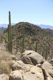 Paisaje del desierto con el cielo azul y el cactus Fotos de archivo libres de regalías