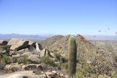 Paisaje del desierto con el cielo azul y el cactus Foto de archivo libre de regalías