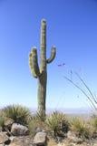 Paisaje del desierto con el cielo azul y el cactus Fotografía de archivo libre de regalías