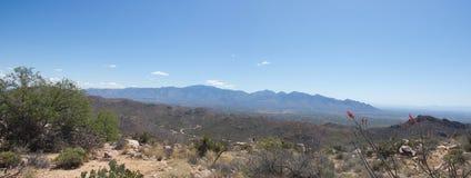 Paisaje del desierto con el cielo azul y el cactus foto de archivo