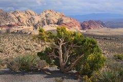 Paisaje del desierto con la roca roja Foto de archivo