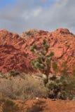 Paisaje del desierto con la roca y el pino rojos de Pinyon Imagenes de archivo
