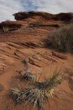 Paisaje del desierto con la vegetación escasa cerca Fotos de archivo libres de regalías