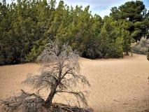 Paisaje del desierto con las plantas y la suciedad arenosa Imágenes de archivo libres de regalías