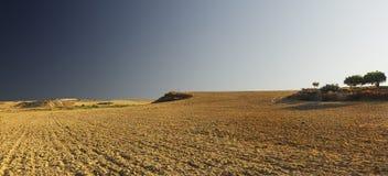 Paisaje del desierto con los árboles en la colina Larnaca, Chipre Fotografía de archivo