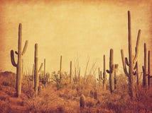 Paisaje del desierto con los cactus del Saguaro Foto en estilo retro Textura de papel añadida Imagen entonada foto de archivo libre de regalías