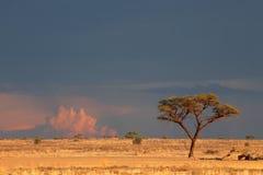 Paisaje del desierto de Kalahari Foto de archivo libre de regalías