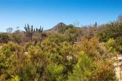 Paisaje del desierto de Los Cabos Imagen de archivo libre de regalías