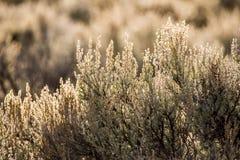 Paisaje del desierto de New México Imágenes de archivo libres de regalías