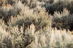 Paisaje del desierto de New México Fotos de archivo
