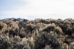 Paisaje del desierto de New México Fotos de archivo libres de regalías