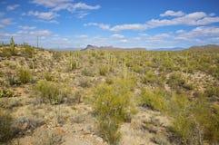 Paisaje del desierto de Sonoran foto de archivo