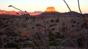 Paisaje del desierto del parque nacional de la curva grande en la puesta del sol Fotografía de archivo