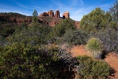 Paisaje del desierto en Arizona Foto de archivo