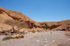 Paisaje del desierto en barranca roja Fotografía de archivo libre de regalías