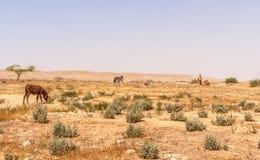 Paisaje del desierto en el desierto del Néguev de Israel Fotografía de archivo