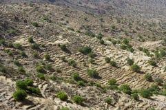Paisaje del desierto en las montañas de Antiatlas Imágenes de archivo libres de regalías
