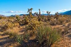 Paisaje del desierto en Nevada, los E.E.U.U. Imagen de archivo