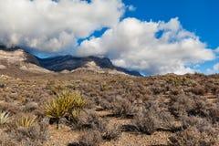 Paisaje del desierto en Nevada meridional, los E.E.U.U. Foto de archivo
