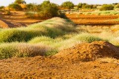 Paisaje del desierto en Sudán Imagenes de archivo
