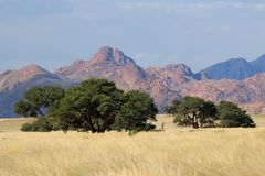 Paisaje del desierto, Namibia Imagen de archivo