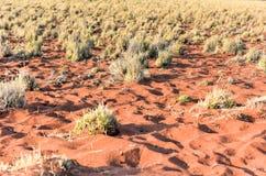 Paisaje del desierto - NamibRand, Namibia Fotos de archivo libres de regalías