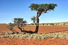 Paisaje del desierto - NamibRand, Namibia Imagen de archivo libre de regalías