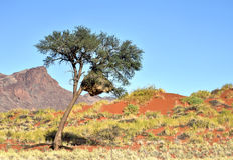 Paisaje del desierto - NamibRand, Namibia Fotografía de archivo