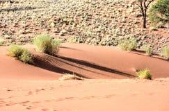 Paisaje del desierto - NamibRand, Namibia Imágenes de archivo libres de regalías