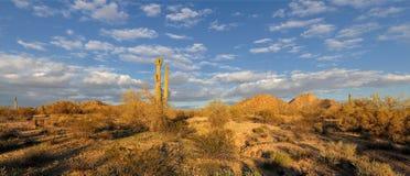 Paisaje del desierto panorámico Fotos de archivo libres de regalías
