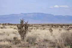 Paisaje del desierto del sudoeste foto de archivo