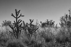 Paisaje del desierto del sudoeste fotos de archivo libres de regalías