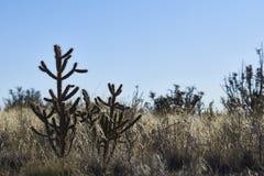 Paisaje del desierto del sudoeste fotografía de archivo libre de regalías