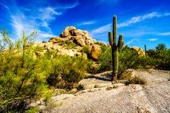 Paisaje del desierto y formaciones de roca grandes con los cactus del Saguaro Fotografía de archivo