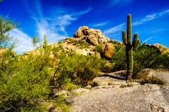 Paisaje del desierto y formaciones de roca grandes con los cactus del Saguaro Imagenes de archivo