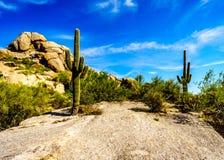 Paisaje del desierto y formaciones de roca grandes con los cactus del Saguaro Fotos de archivo