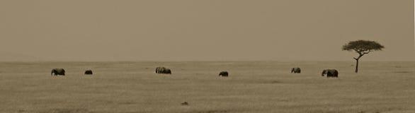 Paisaje del elefante africano Imágenes de archivo libres de regalías