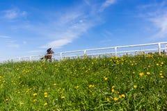 Paisaje del entrenamiento del caballo de raza Fotos de archivo