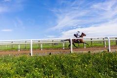 Paisaje del entrenamiento del caballo de raza Fotografía de archivo libre de regalías