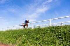 Paisaje del entrenamiento del caballo de raza Imagenes de archivo