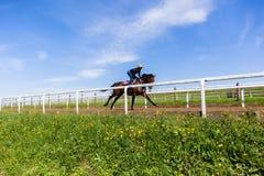 Paisaje del entrenamiento del caballo de raza Foto de archivo