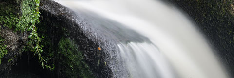 Paisaje del formato del panorama de la cascada en bosque Imagenes de archivo